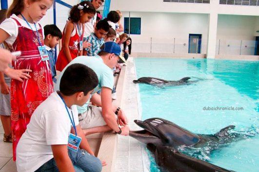 dolphin show dubai