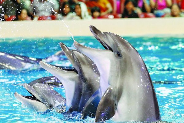Dubai Dolphinarium dolphin and seal show