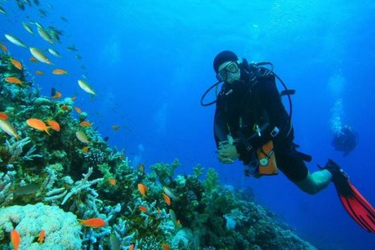 dubai scuba diving - exploring marine creatures in dubai - fujairah diving trips